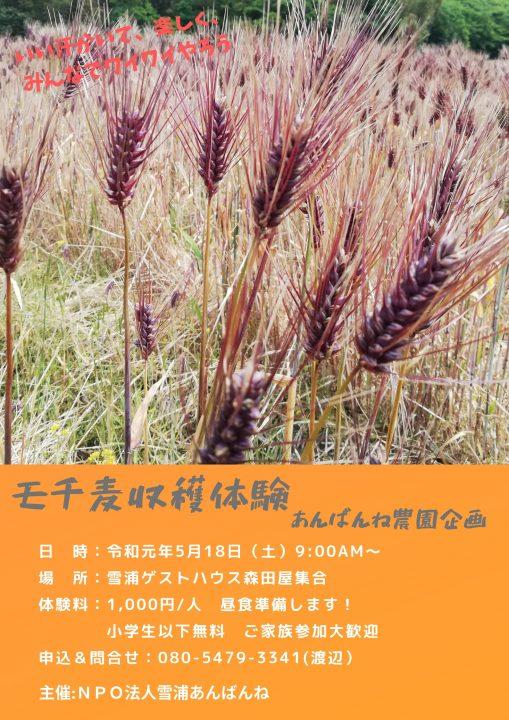 モチ麦収穫体験 令和元年体験プログラム第一弾!!