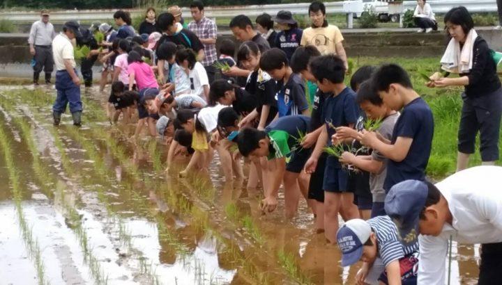 雪浦小学校「お米を作ろう」田植え 6月